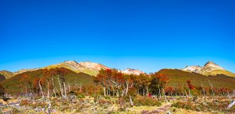 Beautiful landscape of lenga forest, mountains at Tierra del Fuego National Park, Patagonia. Autumn stock photo
