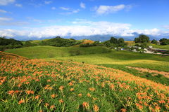 Beautiful landscape. Of lily flowers ,Taiwan Royalty Free Stock Photography