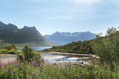Beautiful landscape of Lofoten Islands Royalty Free Stock Photos
