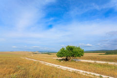 Beautiful landscape and lone tree. On blue sky Stock Image