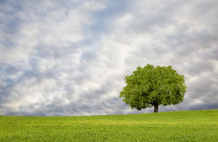 Beautiful landscape and lone tree Stock Photo