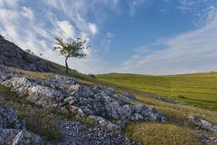 Beautiful landscape with lone tree stands on a hill. Stock Images