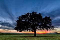 Beautiful landscape with a lonely oak tree in a field, the setting sun shining through branches and storm clouds. Dobrogea, Romania Stock Photography