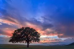 Beautiful landscape with a lonely oak tree in a field, the setting sun shining through branches and storm clouds. Dobrogea, Romania Royalty Free Stock Photos