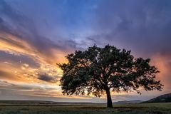 Beautiful landscape with a lonely oak tree in a field, the setting sun shining through branches and storm clouds. Dobrogea, Romania Stock Image