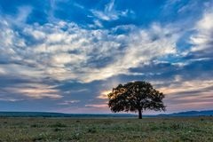 Beautiful landscape with a lonely oak tree in the sunset and dramatic clouds. Dobrogea, Romania Stock Image
