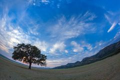Beautiful landscape with a lonely oak tree in the sunset and dramatic clouds. Dobrogea, Romania Royalty Free Stock Image