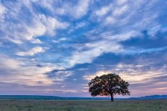Beautiful landscape with a lonely oak tree in the sunset and dramatic clouds. Dobrogea, Romania Royalty Free Stock Photo