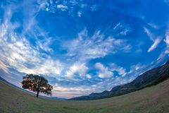 Beautiful landscape with a lonely oak tree in the sunset and dramatic clouds. Dobrogea, Romania Royalty Free Stock Photos