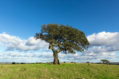 Beautiful Landscape with a Lonely Tree Stock Images