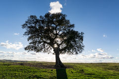 Beautiful Landscape with a Lonely Tree, sun backlit Stock Photography