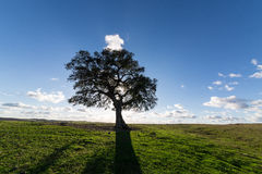 Beautiful Landscape with a Lonely Tree, sun backlit Royalty Free Stock Photo