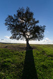 Beautiful Landscape with a Lonely Tree, sun backlit Royalty Free Stock Photography