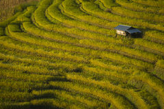 Beautiful landscape of Mae Cham rice field terraced on the mountain. Chiang Mai. Thailand. Royalty Free Stock Image