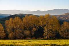 Beautiful landscape with magic autumn trees royalty free stock photography