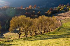Beautiful landscape with magic autumn trees stock photography