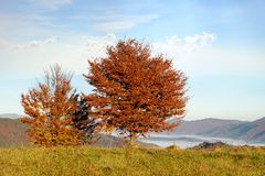 Beautiful landscape with magic autumn trees royalty free stock images