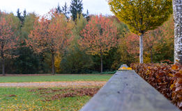Beautiful landscape with magic autumn trees and fallen leaves Royalty Free Stock Photos