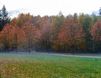 Beautiful landscape with magic autumn trees and fallen leaves Stock Image