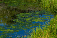 Beautiful landscape of Magic lake in Galapagos Stock Images