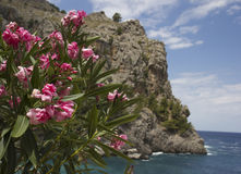 Beautiful landscape in Majorca. Stock Photography