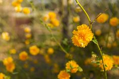 Beautiful landscape of marigold flowers in the sun Stock Image