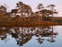 Beautiful landscape in Marimetsa Bog royalty free stock images