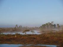 Beautiful landscape in Marimetsa Bog Royalty Free Stock Photos