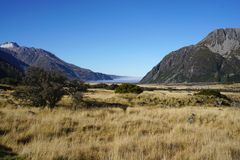 Beautifil landscape of the meadow along the road in New Zealand Royalty Free Stock Photography