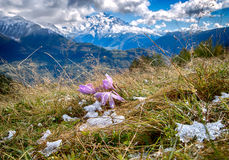 Beautiful landscape of the meadow on a background of snow-capped peaks of the Caucasus Mountains of Georgia Royalty Free Stock Image