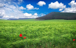 Beautiful landscape with meadow, mountain and blue cloudy sky. Royalty Free Stock Photography