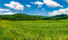 Beautiful landscape with meadow in mountains. Wild herbs on the ground and some clouds on a blue sky. gorgeous summer scenery Stock Image