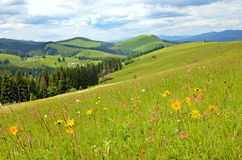 Beautiful landscape with meadow of wildflowers on a background o Stock Photo