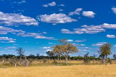 Moremi game reserve landscape, Africa wilderness. Beautiful landscape in the Moremi game reserve, Okavango Delta, Botswana, Africa wilderness royalty free stock images