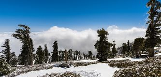 Beautiful landscape on Mount San Antonio (Mt Baldy); white clouds in the background covering the valley; Los Angeles county,. California stock images