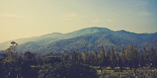 Beautiful landscape with mountain,blue sky and trees vintage tone Royalty Free Stock Photography