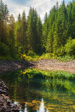 Beautiful landscape of the mountain lake with reflection pine tr Stock Photos
