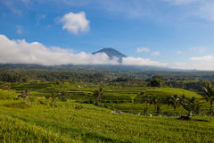 Beautiful landscape of the mountain and rice terraces in Jatiluwih, Bali Stock Image