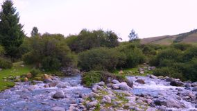 Beautiful landscape with mountain river in forest in Kyrgyzstan stock video footage