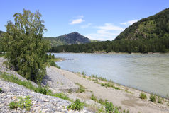 Beautiful landscape of the mountain river Katun. Altai. Royalty Free Stock Photography