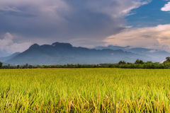 Beautiful landscape mountain view of rice terrace rice fields. Royalty Free Stock Photography
