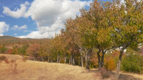 Multicolored trees against the sky with clouds. Beautiful landscape of mountains and colorful trees in autumn windy day stock video footage