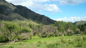 Beautiful landscape with mountains trees and a livestock feeding on the field. 3840x2160. 4k stock footage