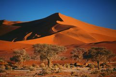 Desert Namib stock images