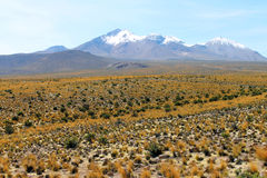 Landscape of National Park of Lauca Stock Images