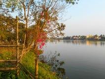 Beautiful landscape near a lake. Beautiful trees near a lake Stock Photos