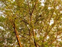 Beautiful tree. Nest on a tree, nice sceen Stock Photos