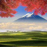 Beautiful landscape with nice background color Royalty Free Stock Photo