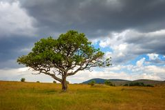 Landscape with nobody tree in Africa Stock Photos