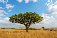 Landscape with nobody tree in Africa. Beautiful landscape with nobody tree in Africa royalty free stock photo